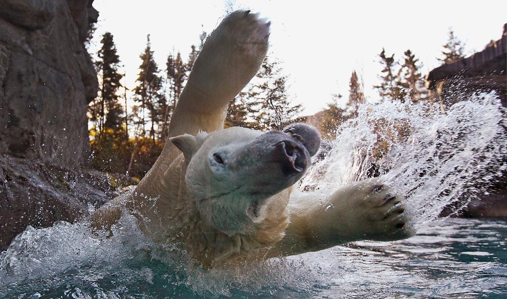 Увлекательный мир животных (15 фото)