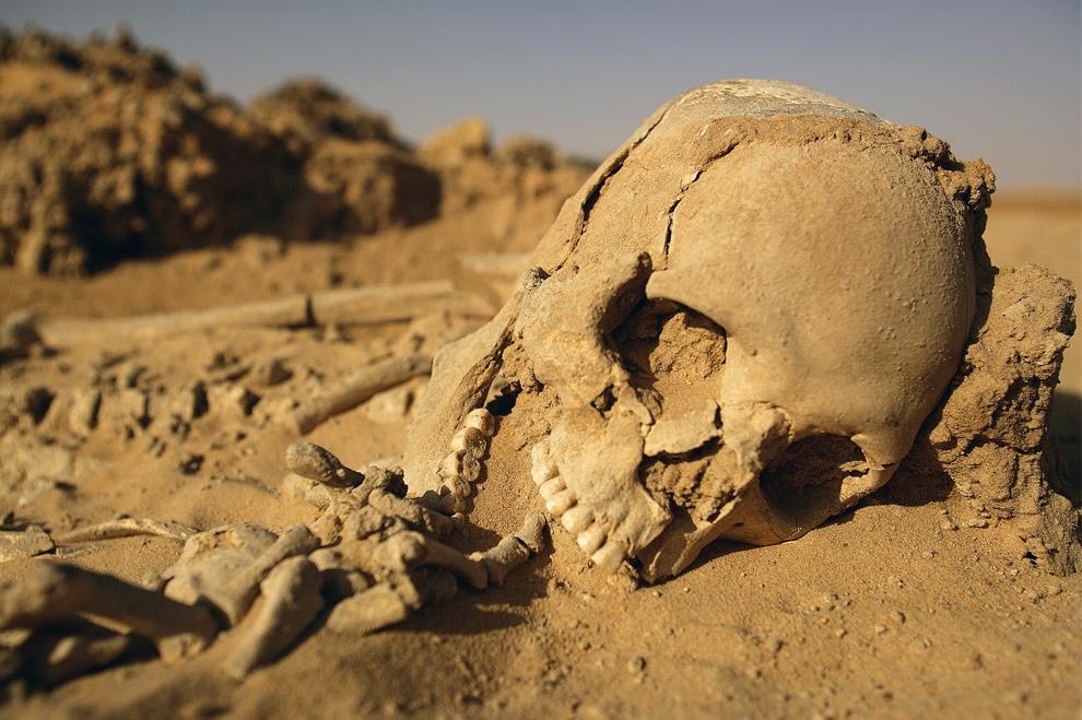 Что таит в себе зеленая Сахара? (15 фото)