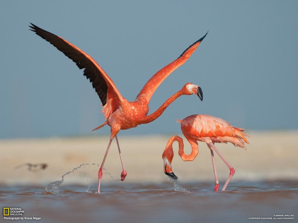 Шедевры National Geographic. Апрель 2012 (15 фото)