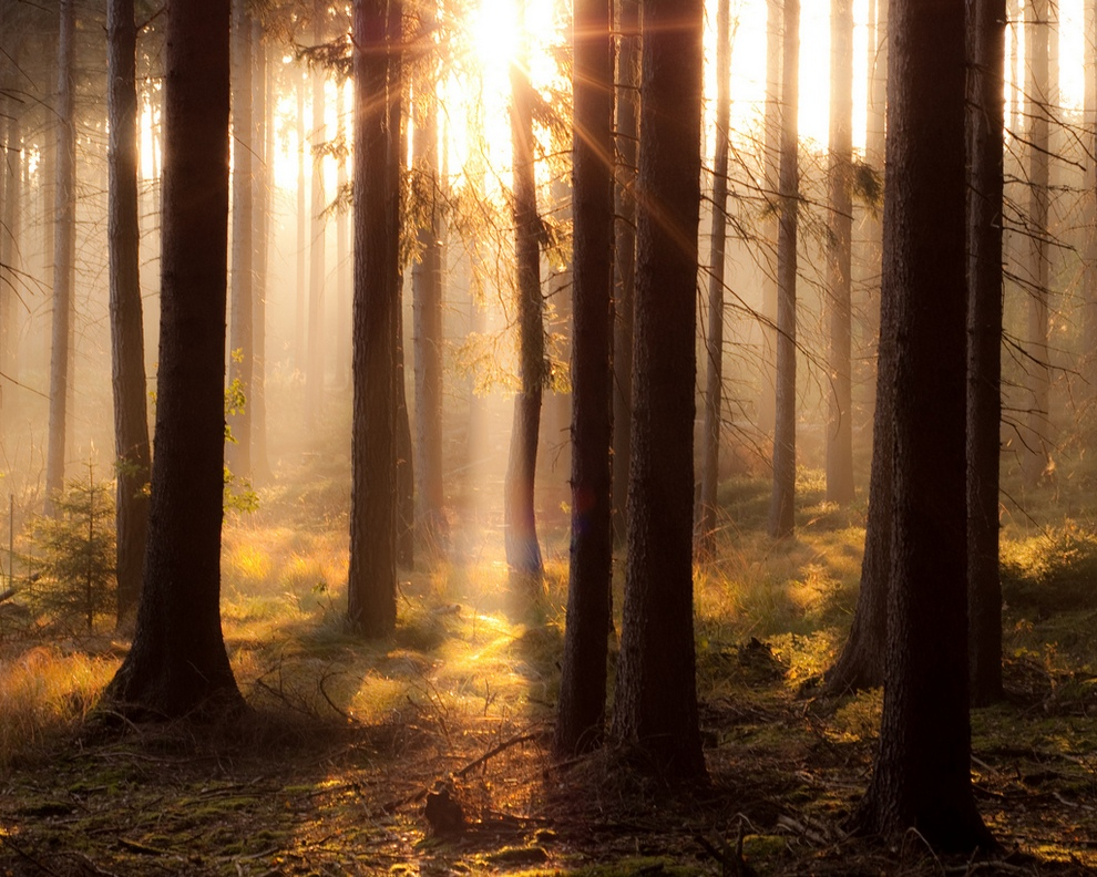 Великолепие солнечных лучей (10 фото)