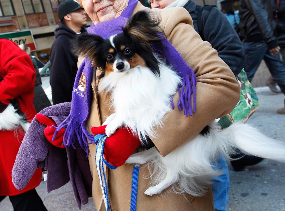 На выставке собак (15 фото)