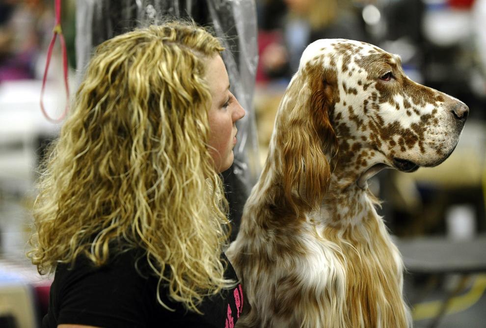 Лиана днем, смешные картинки про выставки собак