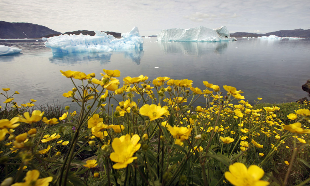 Гренландия: Зеленое царство среди айсбергов (15 фото)