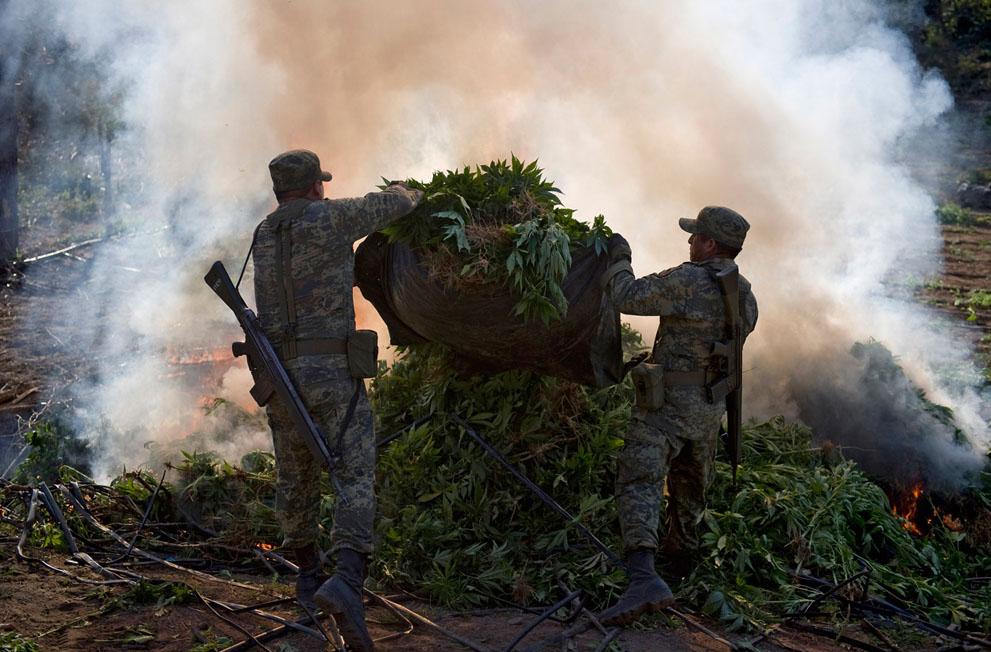Мексиканские военные обнаружили поле марихуаны и сжигают урожай наркотиков, Лос-Альгодонес, Кульякан, штат Синалоа. (Alfredo Estrella/AFP/Getty Images)