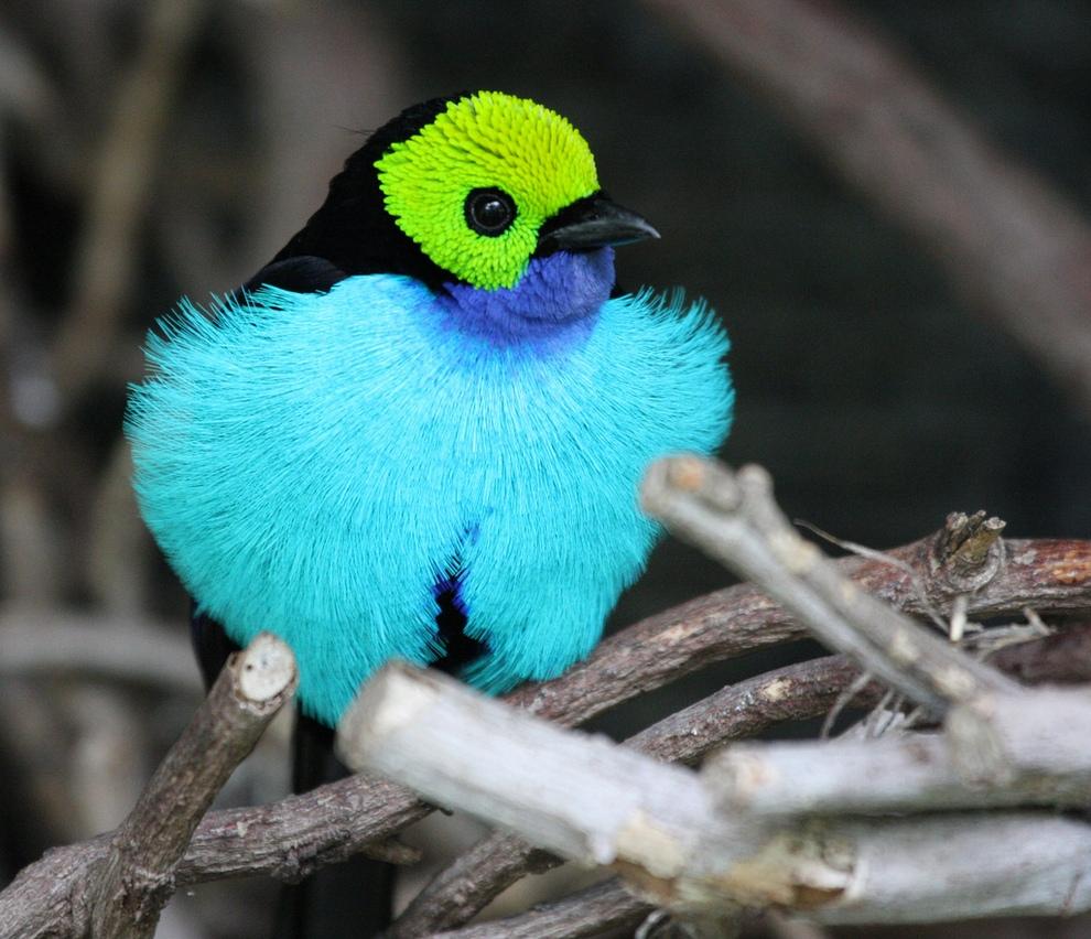 Топ-10 самых красивых птиц планеты (фото)