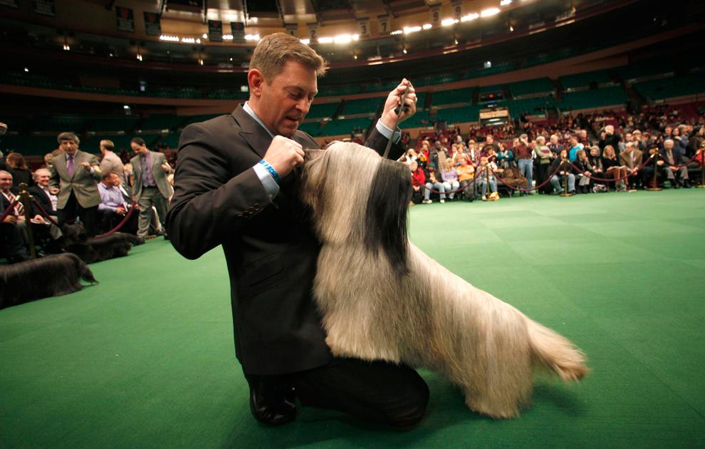 """Скай терьер с коротким именем Грэгсмур Бадди Гудмэн (Cragsmoor Buddy Goodman) получает вознаграждение от своего хозяина Лоуренса Корнелиуса (Lawrence Cornelius) во время того, как жюри оценивает собак из группы """"терьеры"""". (Mike Segar/Reuters)"""
