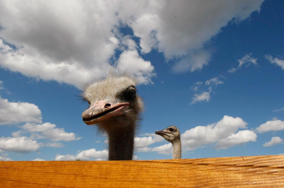 Животные в новостях. Выпуск 2 (14 фото)