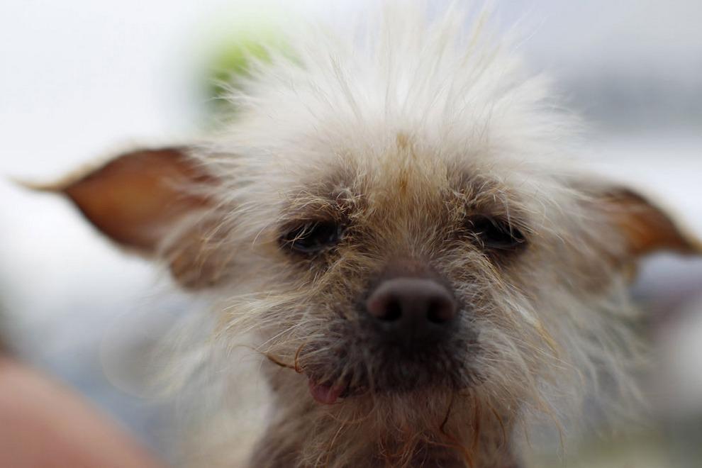 Уродливая собака в мире 2012 в городе