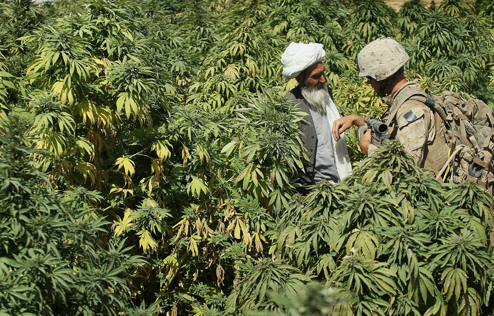 Уругвай легализовал марихуану