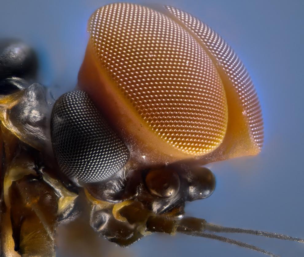 Мир под микроскопом Nikon Small World 2011. Выпуск 1 (15 фото)