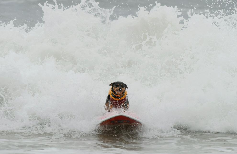 Повелители волн. Продолжение (15 фото)