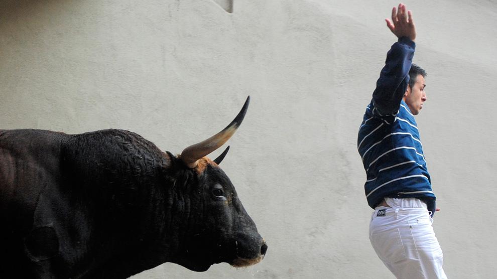 Girl fucking bull pics