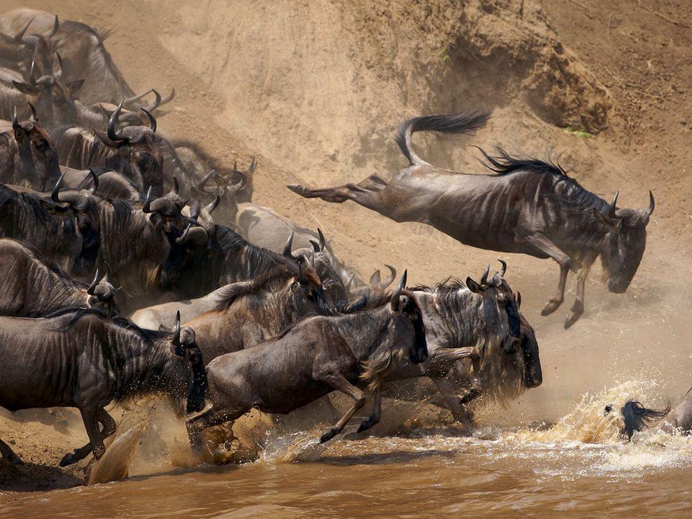 Масштабные миграции. Продолжение (15 фото)