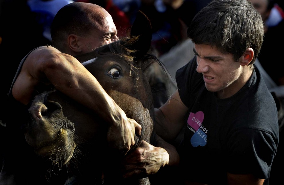 Два опытных агаррадора пытаются справиться с диким жеребцом во время фестиваля «Рапа-дас-Бестас», Сабуседо, Испания. (MIGUEL RIOPA/AFP/Getty Images)