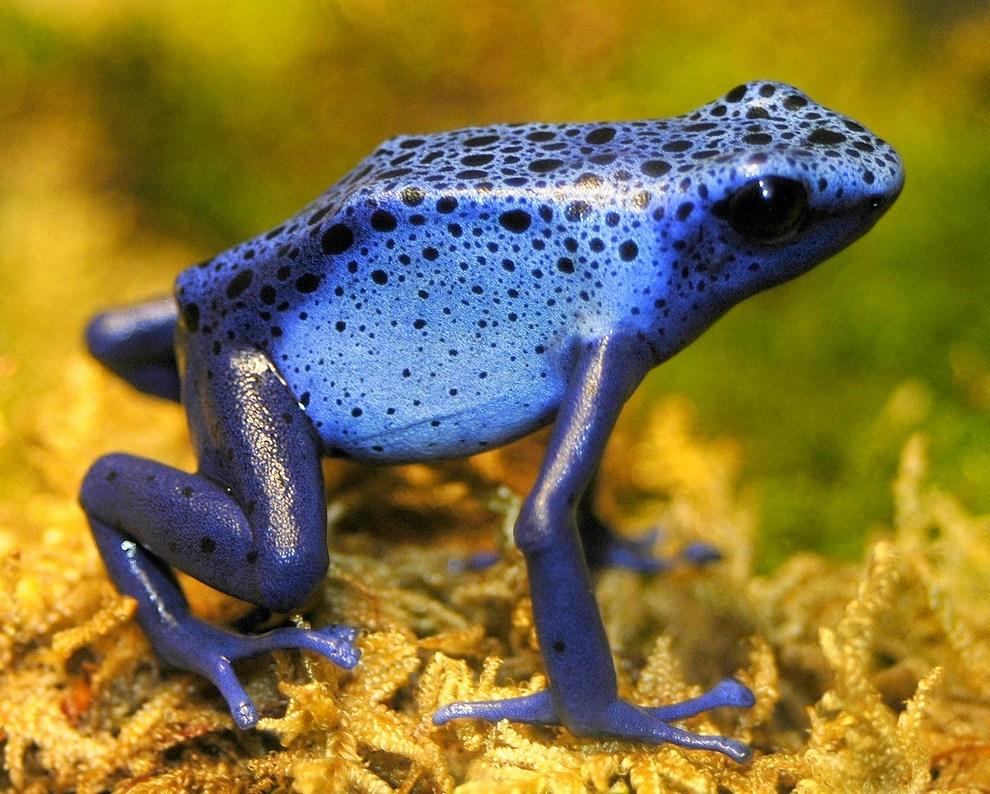 Топ-10 самых ядовитых существ нашей планеты (10 фото)