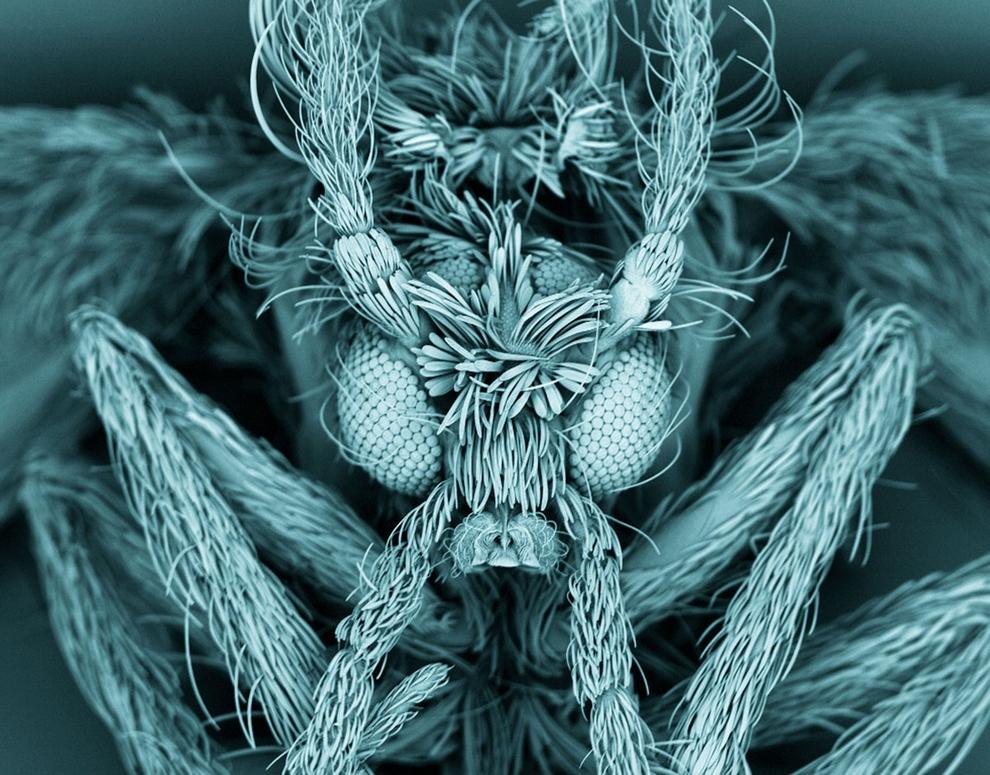 Микрография