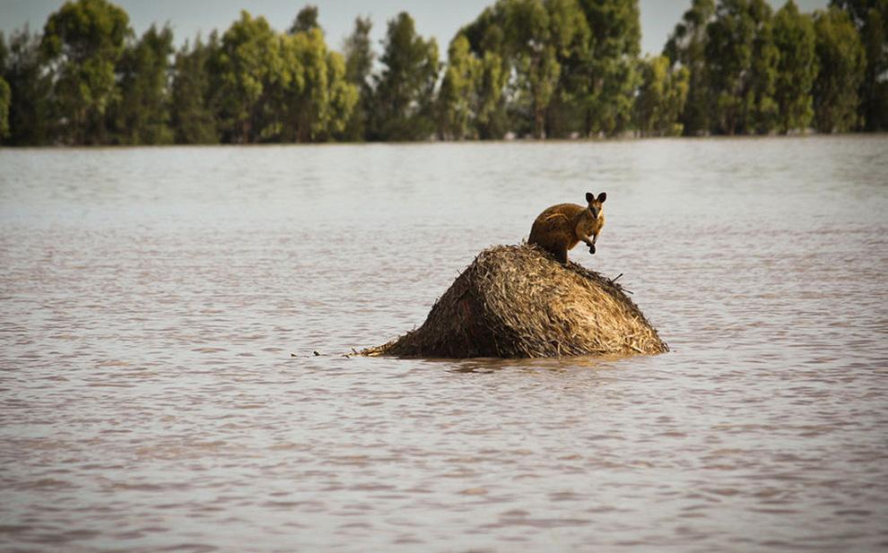 Наводнение в Австралии (20 фото)