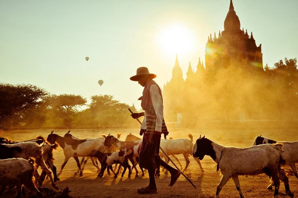 Одна из семи фотографий, «достойных победы». Слова автора: «Более 2 000 буддийских храмов и пагод заполняют равнины Пагана. Некогда столица одноименного королевства, теперь это обитель фермеров и скота. Лучший способ увидеть Паган (кроме путешествия на воздушном шаре, конечно) — поездка на велосипеде. Здесь можно легко съехать с проторенных дорог и дать волю фантазиям в стиле Индианы Джонса». (Peter DeMarco/National Geographic Traveler Photo Contest)