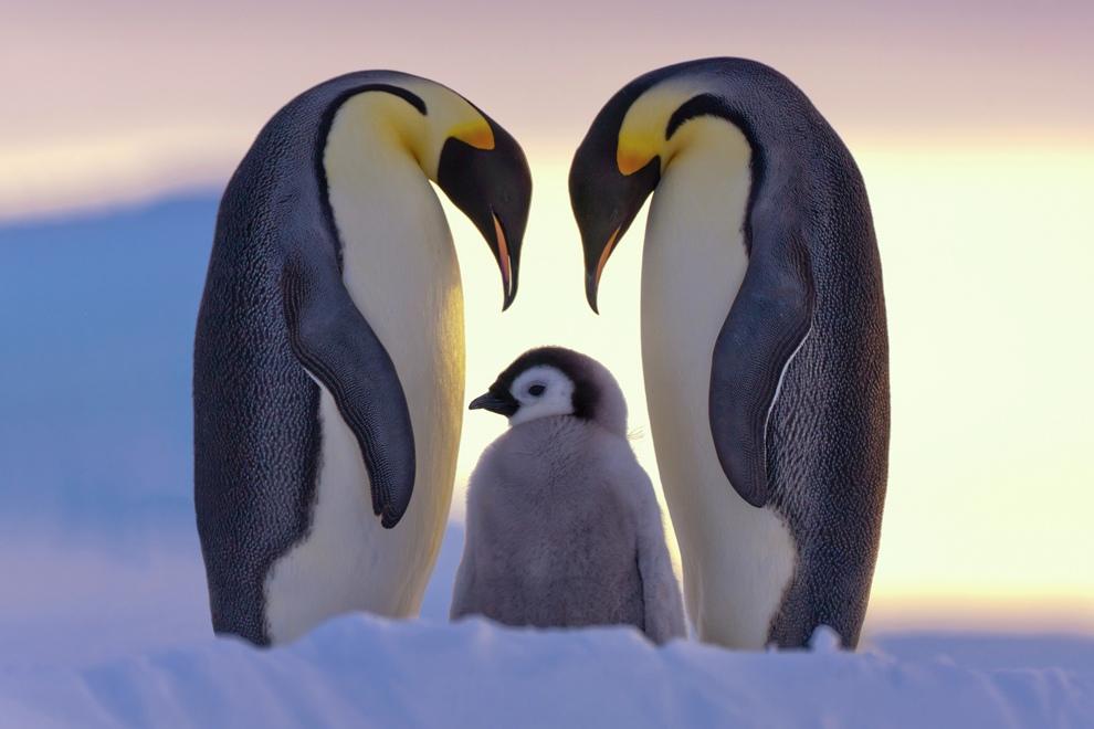 Лучшие фотографии National Geographic: Природа (20 фото)
