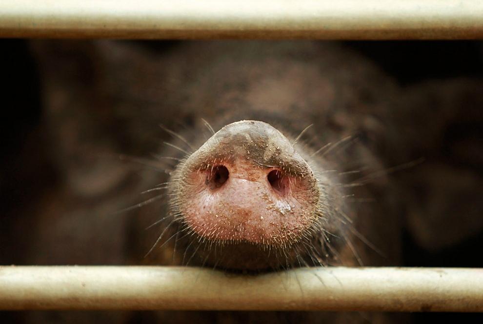 Животные в новостях. Выпуск 7 (15 фото)