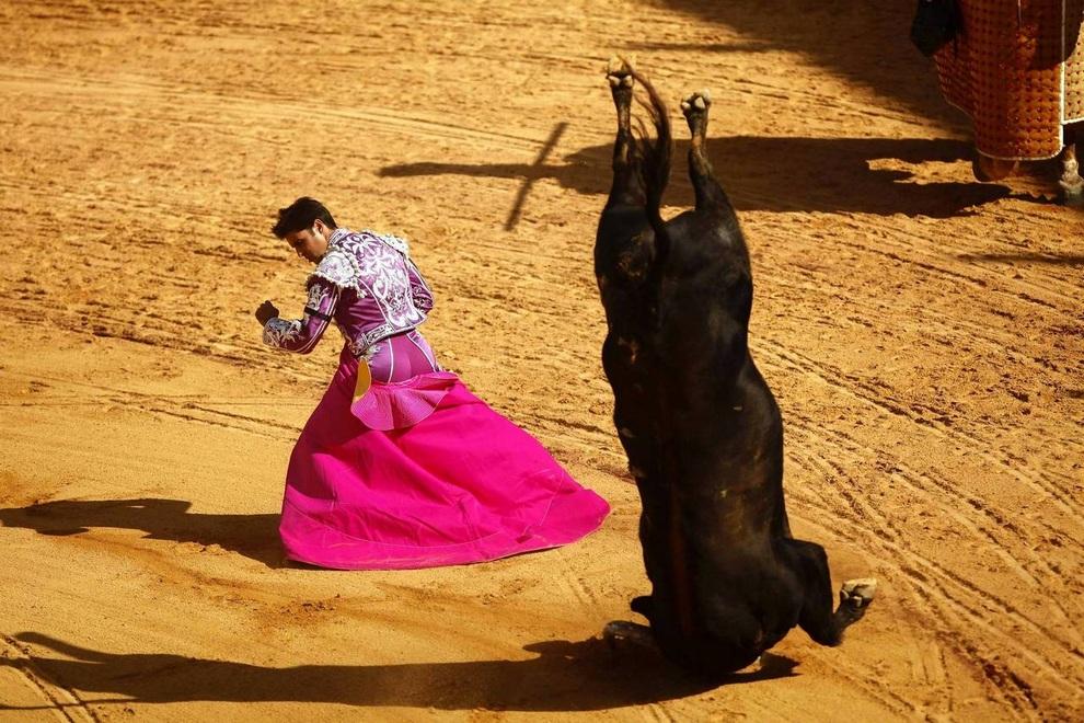 Бык делает сальто после успешного приема испанского тореадора Франсиско Риверы (Francisco Rivera) на ежегодной корриде в Ронде, Малага, Испания. (REUTERS/Jon Nazca)