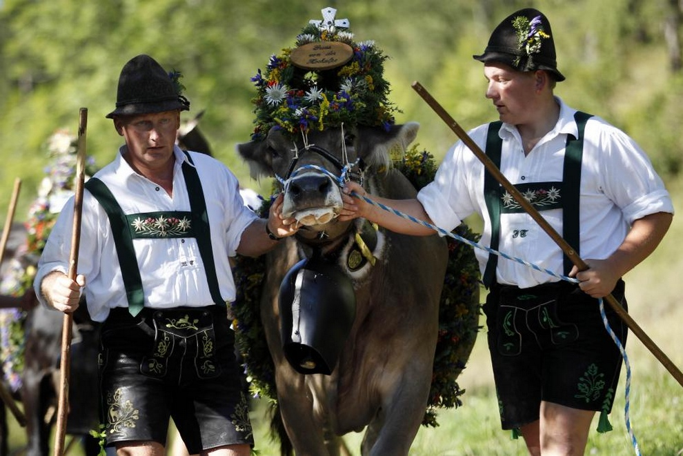 Традиционный праздник «Альмабтриб» в Баварии (6 фото)