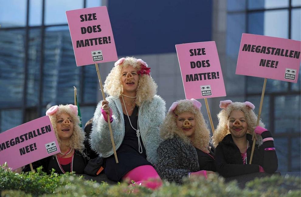 Демонстрантки в образе свиней стоят у штаб-квартиры ЕС в Брюсселе, Бельгия, требуя провести радикальную реформу сельского хозяйства. (John Thys/Getty Images)