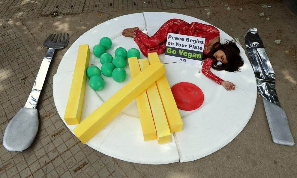 Активистка организации «Люди за этичное обращение с животными» (PETA) лежит на гигансткой тарелке под видом куска мяса во время флешмоба в Бангалоре, Индия. Ее транспарант гласит: «Мир начинается у тебя на тарелке! Становивись веганом». (Manjunath Kiran/AFP/Getty Images)