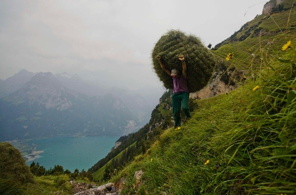Уборка урожая (30 фото)