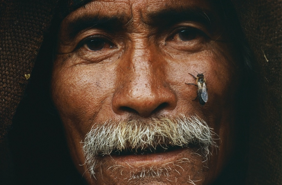 Охотник за мёдом диких пчёл (10 фото)