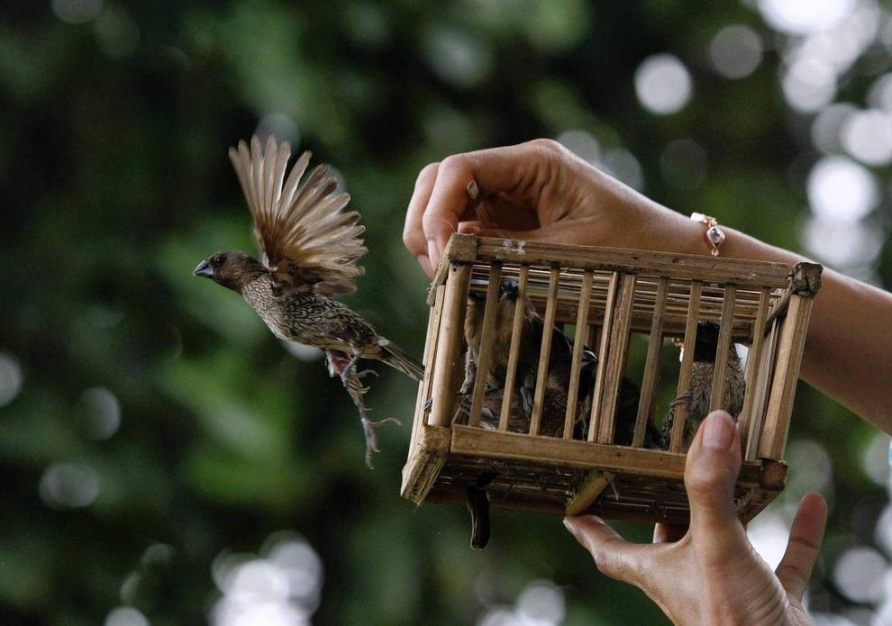 Стихи залетела в клетку птица просто так из любопытства