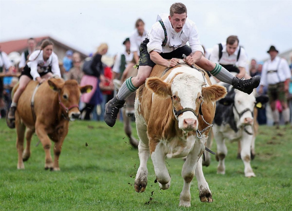 Чемпионат Баварии по скачкам на быках (15 фото)