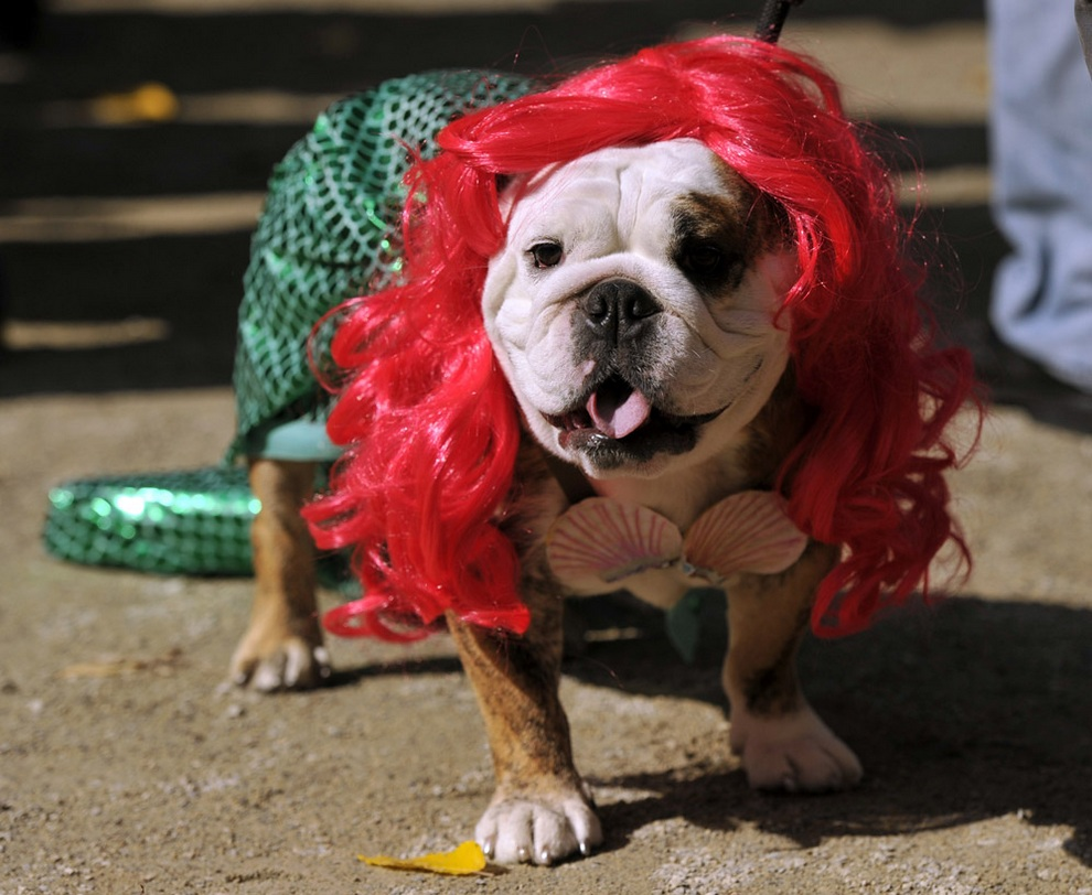 Собаки Нью-Йорка готовятся к Хэллоуину (40 фото)