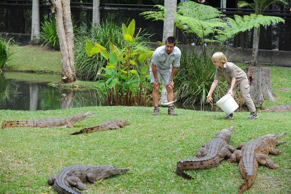 8-летний Роберт Ирвин (Robert Irwin; справа), сын покойного «Охотника за крокодилами» Стива Ирвина (Steve Irwin), впервые публично кормит пресноводных крокодилов в Австралийском зоопарке, Саншайн-Кост, штат Квинсленд, Австралия. (Photo by Ben Beaden/Australia Zoo via Getty Images)