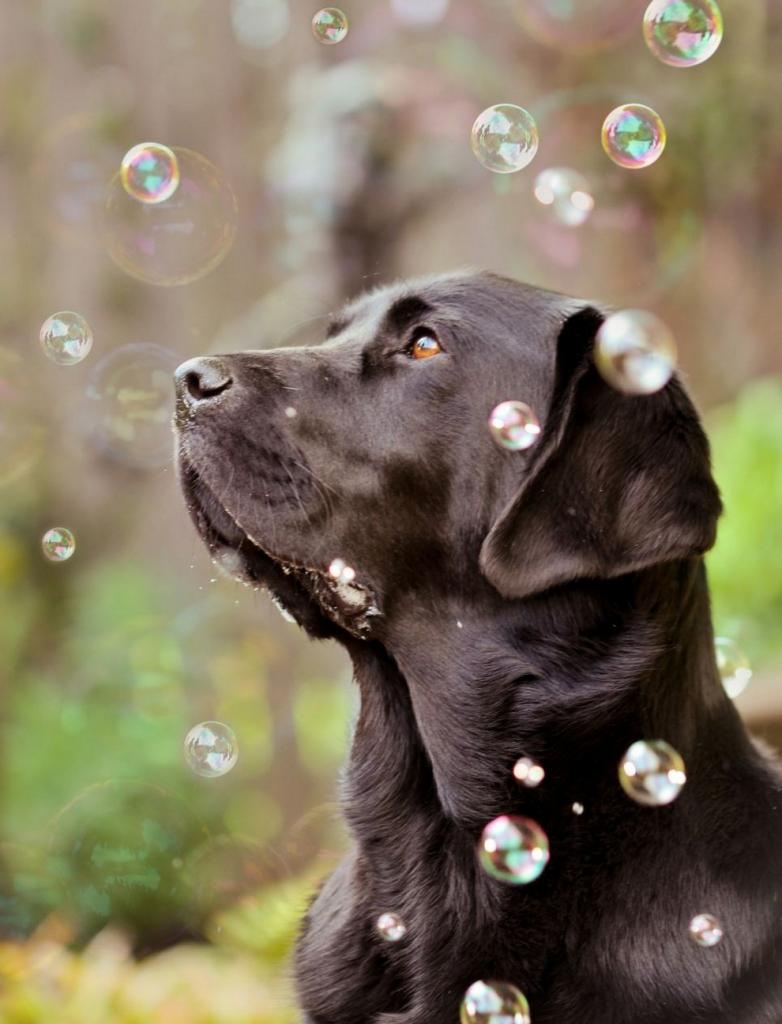 Pet Photography Ideas Popular Pet Photographers Interviews