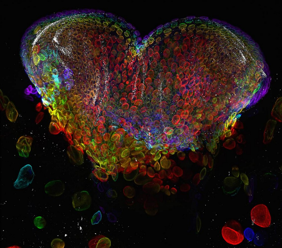 Лучшие микрофотографии Nikon Small World 2012 (20 фото)