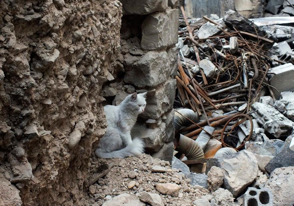 Руины сирийских городов (13 фото)