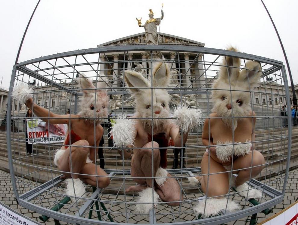 Защитники животных заперлись в клетке посреди Вены (4 фото)