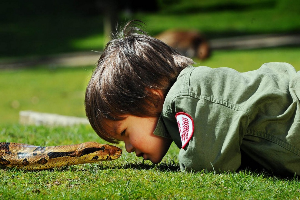 Двухлетний «укротитель рептилий» (5 фото)