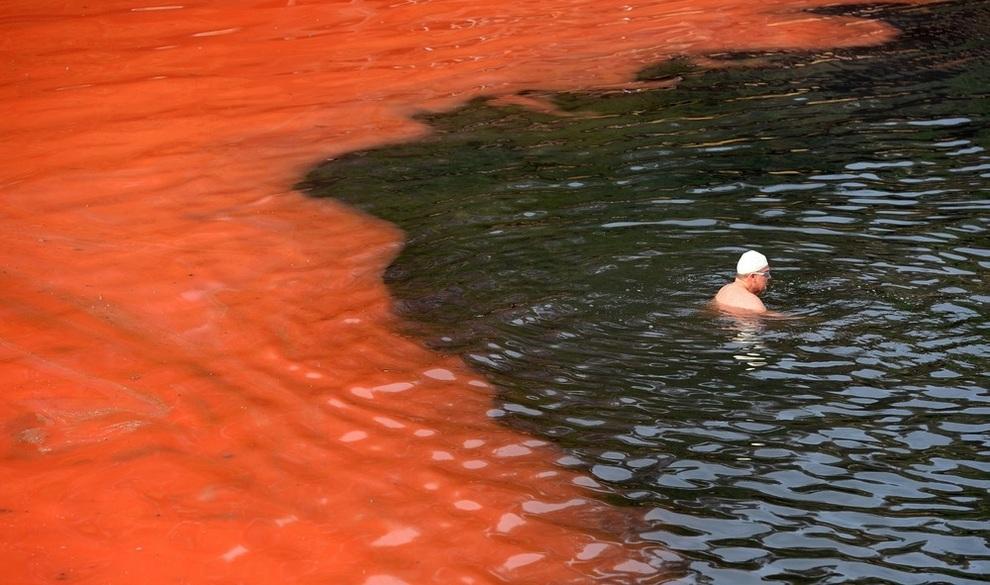 Вода у побережья Сиднея стала ярко-красной (4 фото)