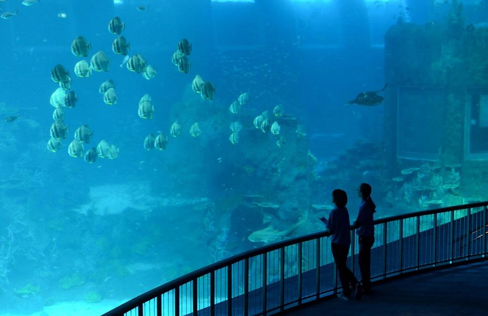 В Сингапуре открывается самый большой в мире океанариум (7 фото + видео)