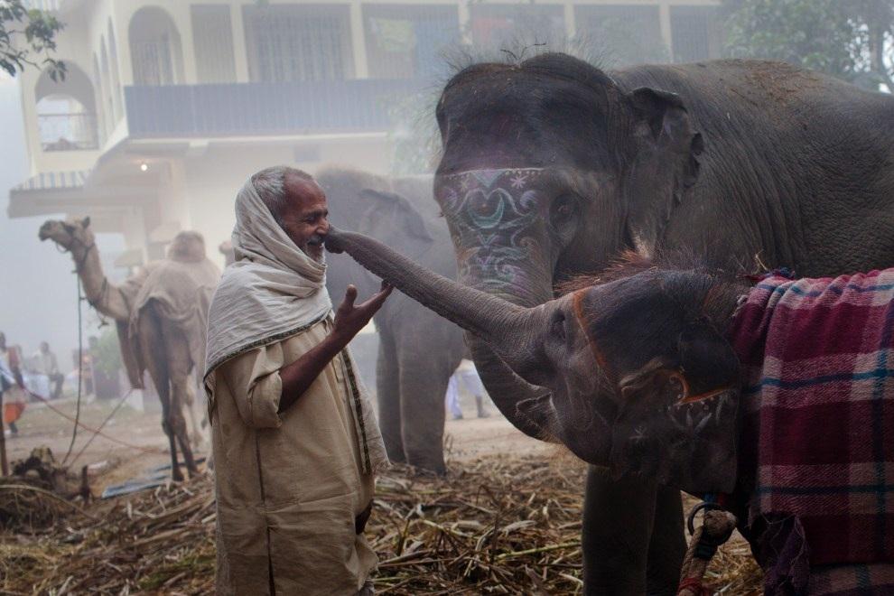 Индийская ярмарка слонов (17 фото)