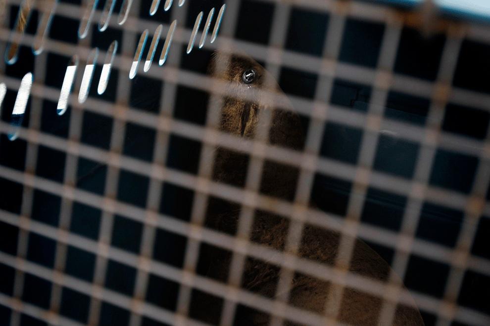 Морские львы Камило и Алекс вылечены и отпущены на волю (8 фото)