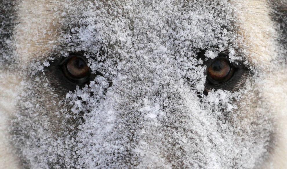 Европу засыпало снегом (15 фото)