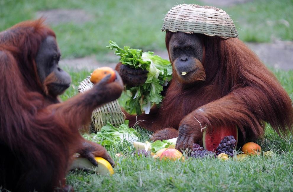 Поздравлением, прикольные картинки животных пьяных