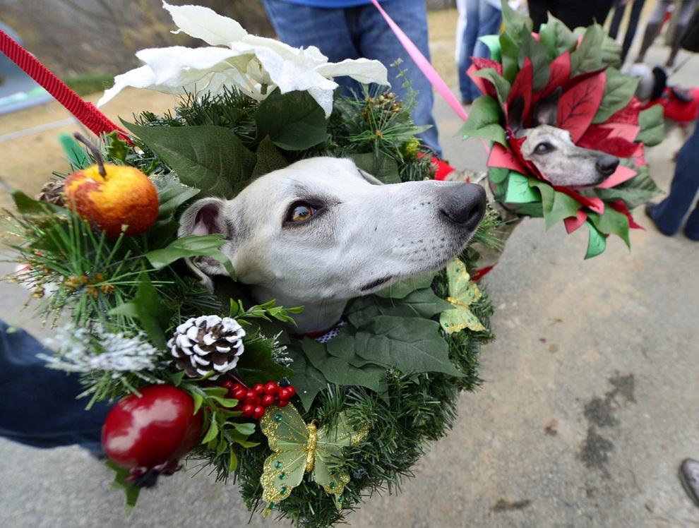 Reindog Parade 2012: Рождественский парад собак в Атланте (10 фото)