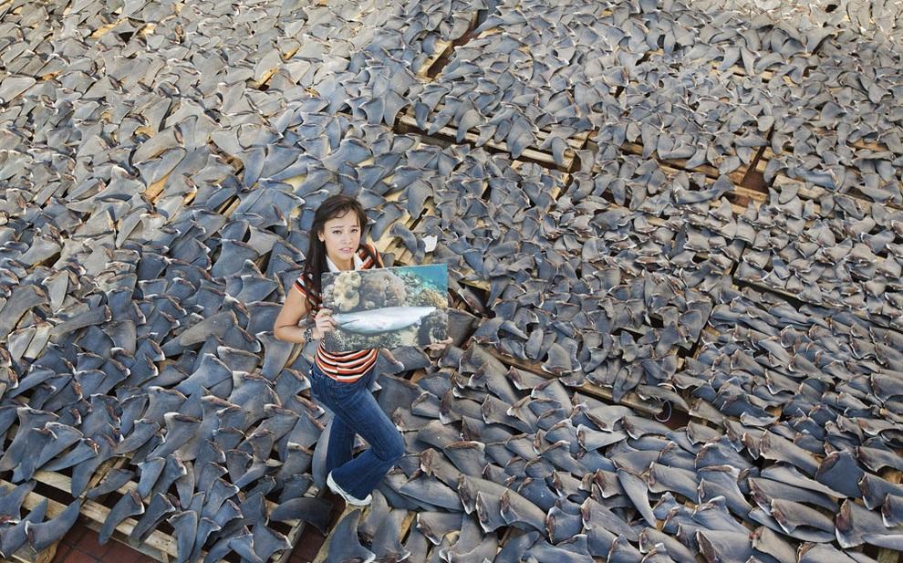 Вяление акульих плавников на крыше завода в Гонконге (10 фото)