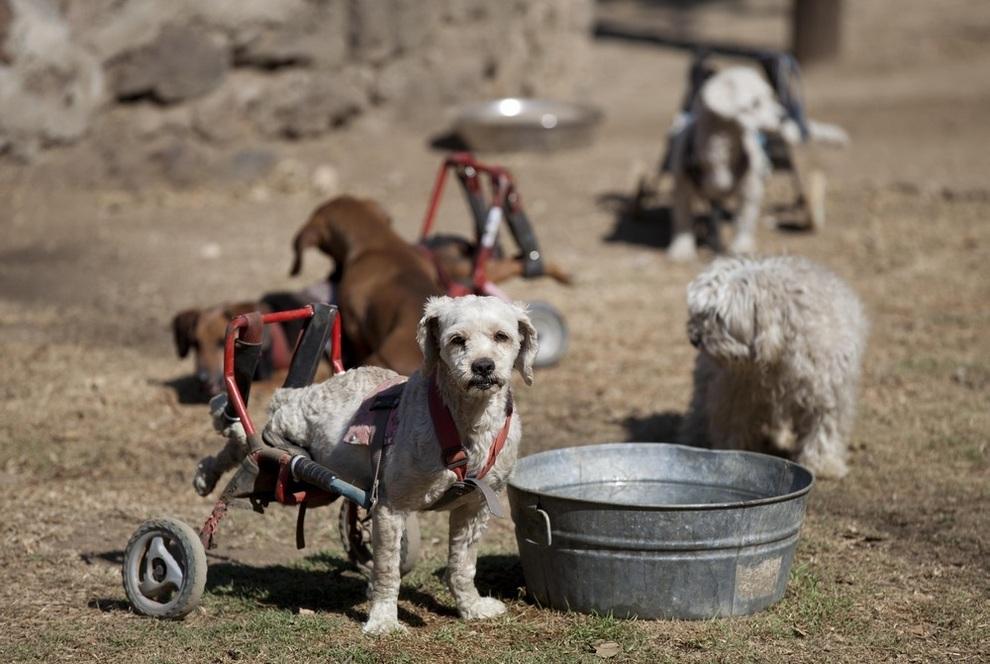 Приют для брошенных собак с ограниченными возможностями (3 фото)