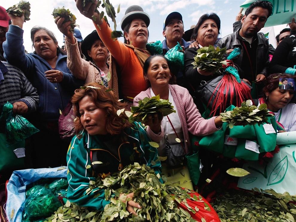 Боливийцы празднуют легализацию листьев коки (10 фото)