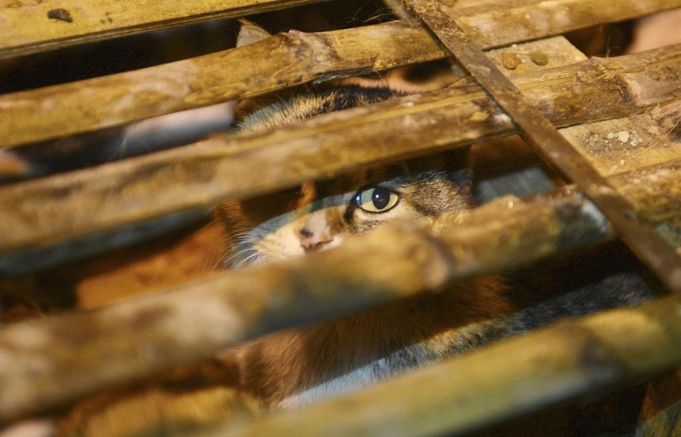 Спасение кошек в Китае